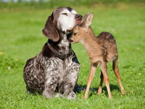 Fawn and dog sitting on grass